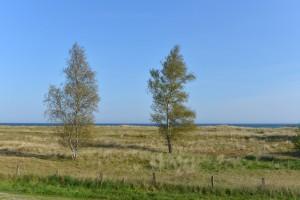 Grüne Ostseelandschaft