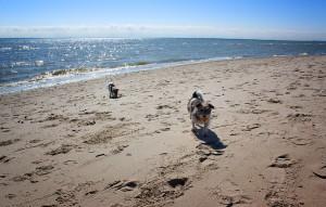 Separater Hundestrand